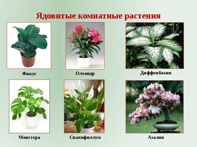 Комнатные цветы в картинках с названиями их органов