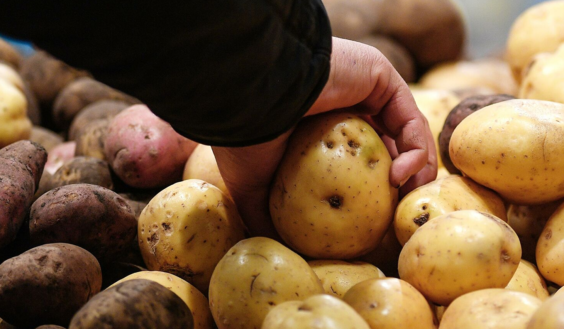 сортовой картофель